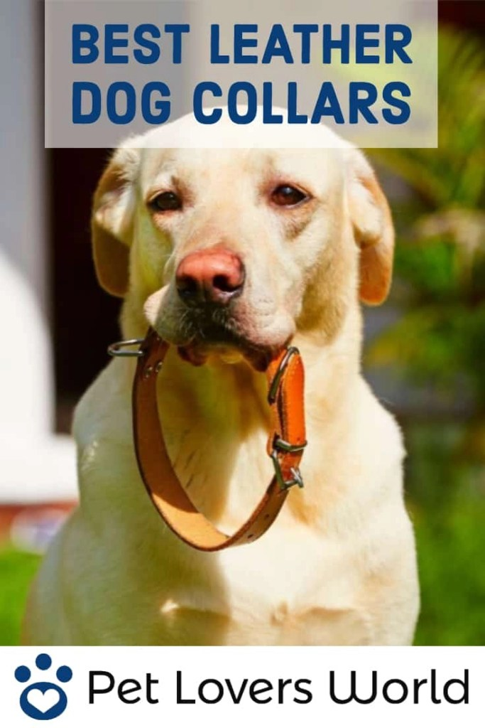 Best Leather Dog Collars Reviews Pinterest Image