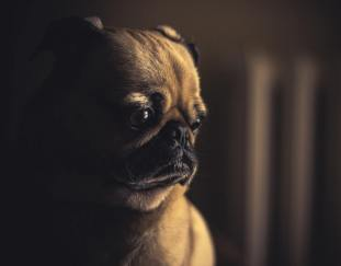 what-causes-dog-diarrhea