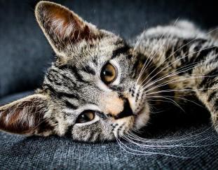 cats-full-grown
