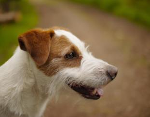 10-best-dog-probiotics-reviews-guide