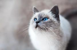 10-best-dry-cat-foods-reviews-guide