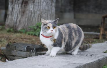 5-best-cat-flea-collars-reviews-guide