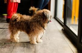 8-best-dog-doors-reviews-guide