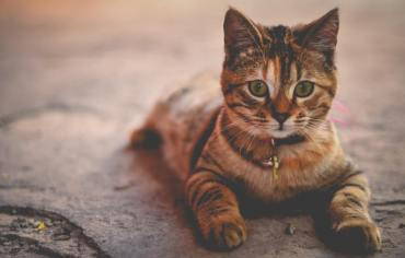 can-cats-eat-popcorn