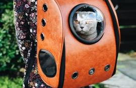 10-best-cat-carriers-reviews-guide