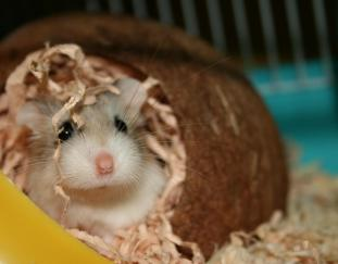 5-best-hamster-bedding-reviews-guide