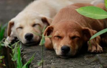 how-do-dogs-sleep