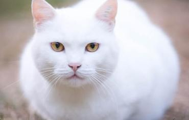 are-cats-clean