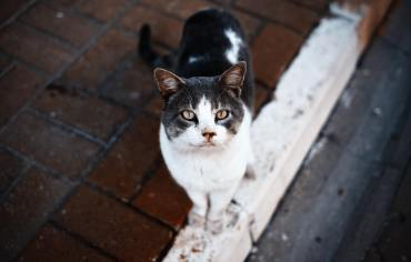 do-cats-have-rabies