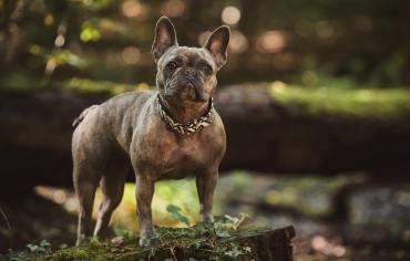 do-dog-ticks-carry-diseases