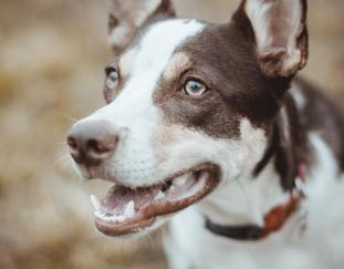17-symptoms-dog-food-allergies