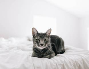 why-do-cats-pee-on-the-bed