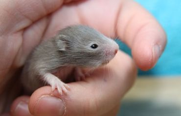 5-signs-your-hamster-is-dying
