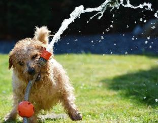 5-tips-to-stop-your-dog-from-peeing-in-the-house