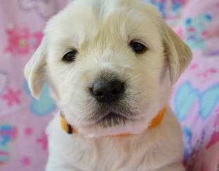 is-dog-pneumonia-contagious