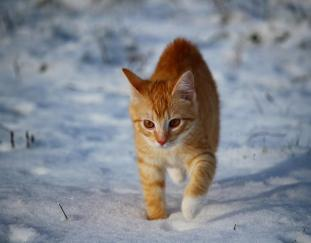 how-cold-is-too-cold-for-cats