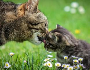 why-do-cats-groom-each-other
