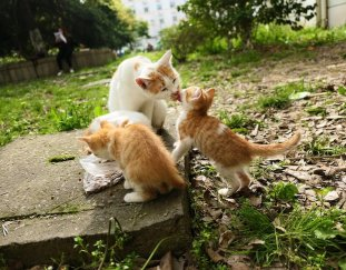 why-do-cats-lick-each-other