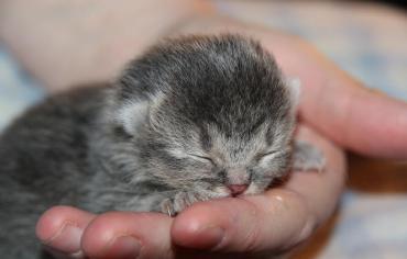 why-do-cats-sleep-so-much