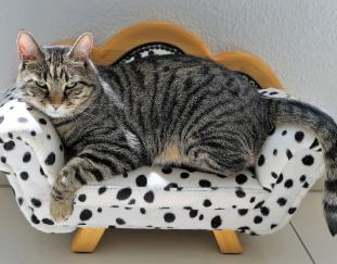 how-to-keep-cats-from-scratching-furniture