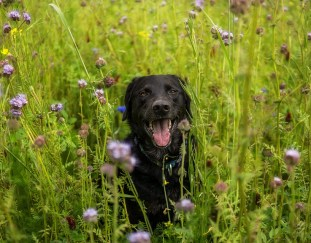 how-to-keep-dogs-out-of-flower-beds