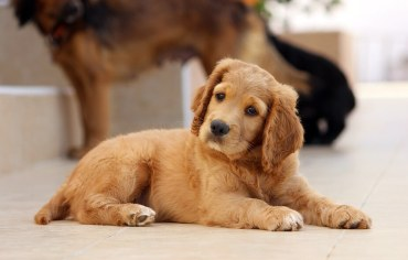 what-causes-hot-spots-on-dogs