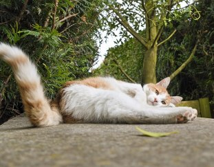 why-do-cats-wag-their-tails