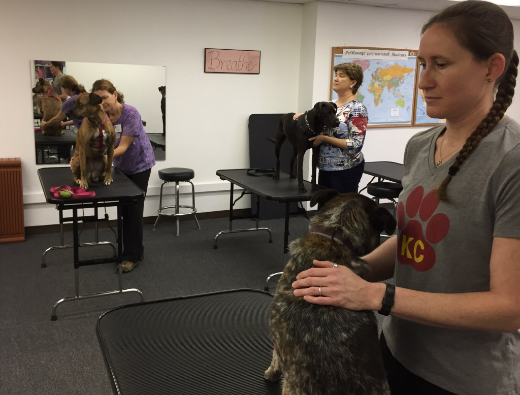 PetMassage Advanced Level Workshop Students Working With Dogs
