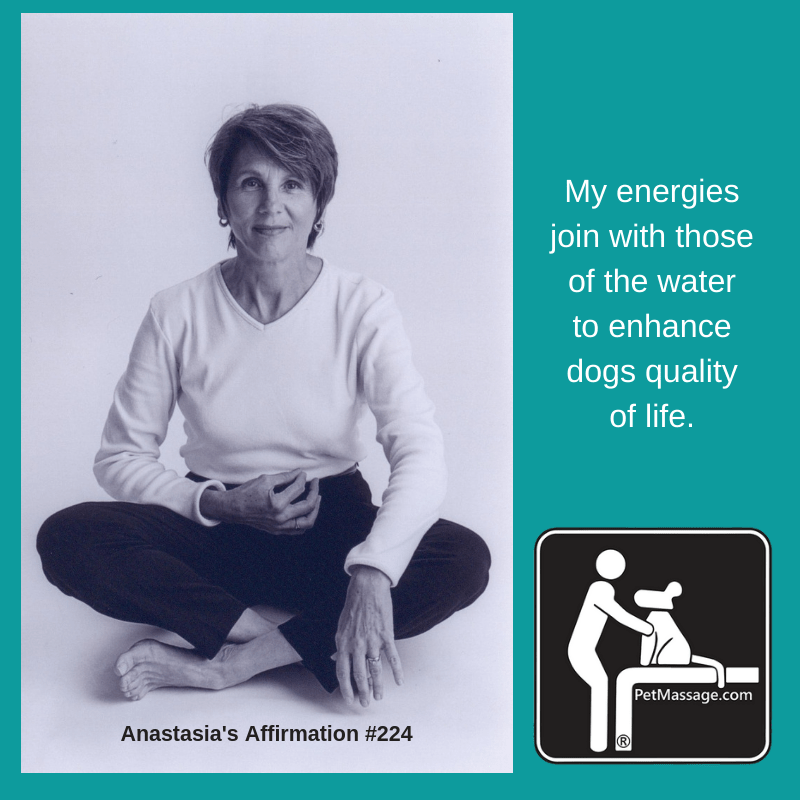 My energies join with those of the water to enhance dogs quality of life.