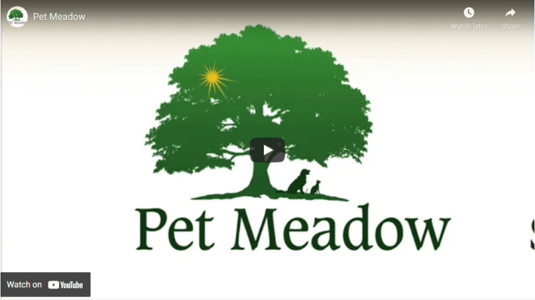 Screenshot of Pet Meadow video 1
