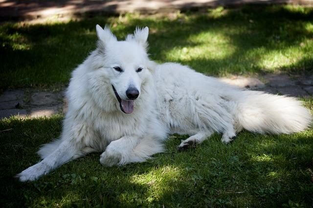 dog-177439_640