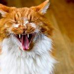 犬や猫の口内炎