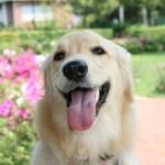 犬の生活習慣病予防と口臭予防にリンゴ酢