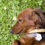 犬の飼育と周辺知識の特集:季節ごとの健康管理ポイント