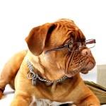 老犬がかかりやすい病気と対処法