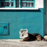 犬・猫用のアトピー薬 アトピカについて