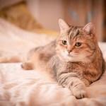 健康な猫の育て方