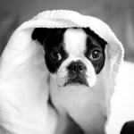 ペットの白内障の治療薬キャンCとシーナックについて