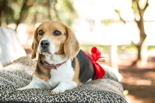 犬の腎不全について