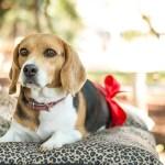 犬の腎不全の原因と予防と対策と治療について