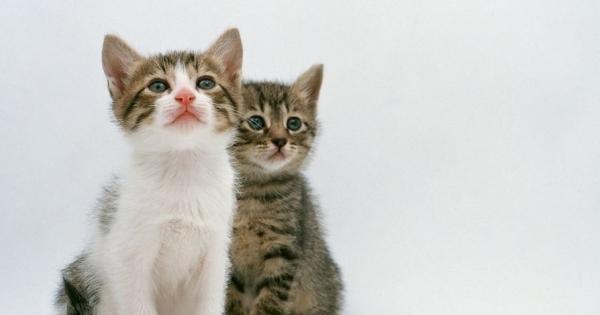 傳說中貓有九條命是真的嗎?