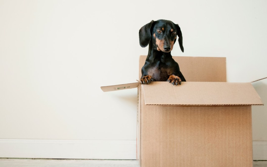 Help Your Pet Adjust to a New Home: Moving Tips for Dog and Cat Parents