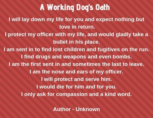 This working dog's oath says it all