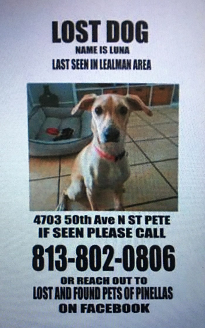 Another example of how to create a missing pet flyer