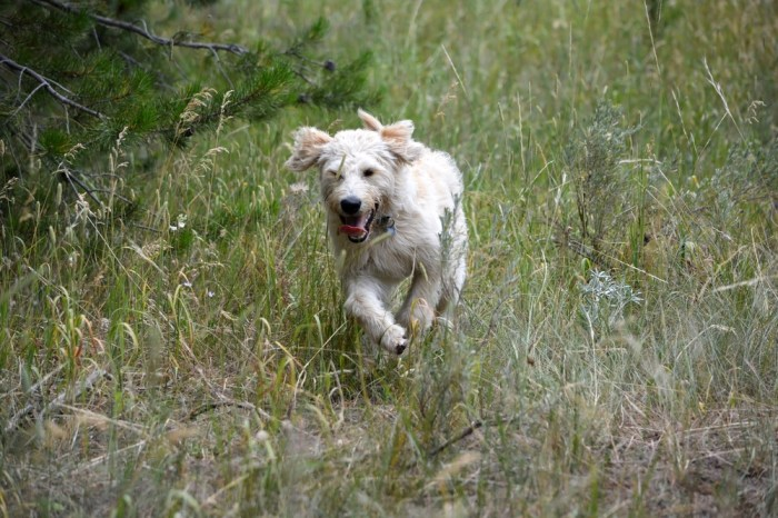 Very often dogs run away because they catch a scent they cannot ignore
