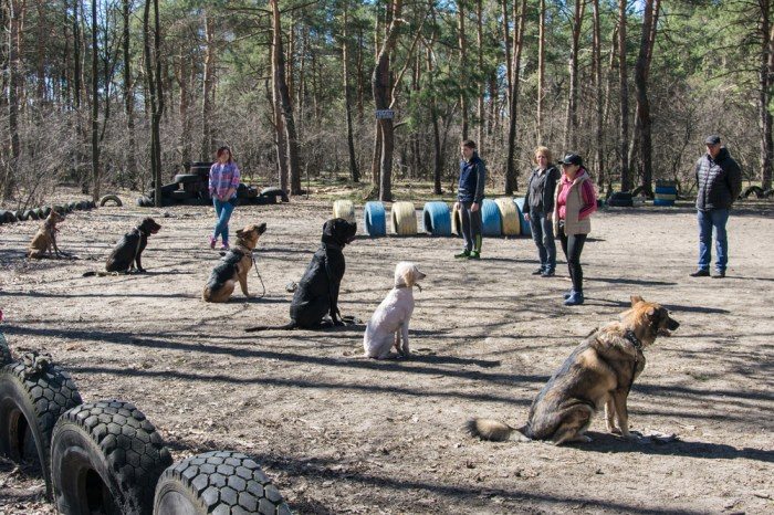 Obedience training is important but wild instincts take over and why dogs run off