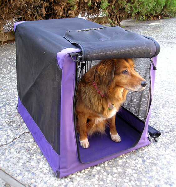 Successful search for a lost pet after leaving its crate at location where last seen Photo credit: Taken by Elf, transferred from en.wikipedia to Commons by JohnnyMrNinja using CommonsHelper. Licensed under the Creative Commons Attribution-Share Alike 3.0 Unported license.