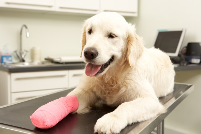 When a lost pet has surgery and follow-up it has a better chance of going home or being adopted
