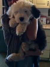 Puppy! (2)