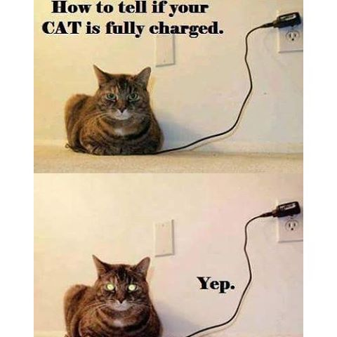 cat-charged-green-light-eyes-memes